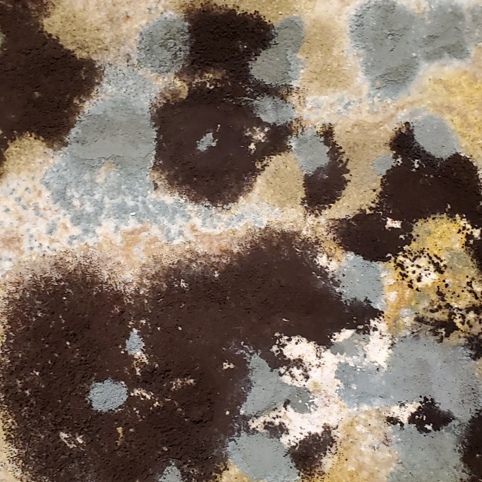 Mold Removal in Aurora CO